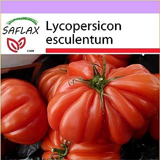 SAFLAX - Tomate - Costoluto Genovese - 10 semillas - Lycopersicon esculentum