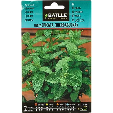 Semillas Aromáticas - Menta Spicata (Hierbabuena) - Batlle