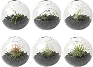 Wall Planter (6-Pack) - Terrarium Kit for Hanging Plants & Succulents - use as Vertical Garden for Aesthetic Room Decor & Outdoor Wall Decor