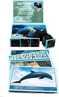 Stages Learning Real Picture Sea Life Wooden Cube Language Builder Preschool Puzzle (12 Piece)