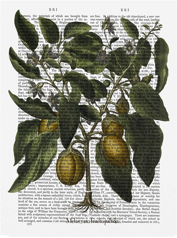 Trademark Fine Art Peppers 6 by Fab Funky, 14x19