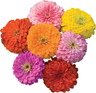 Burpee Giant Flowered Mixed Colors Zinnia Seeds 375 seeds