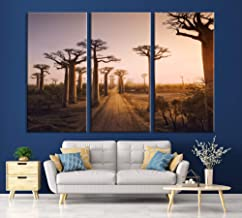 Best baobab tree photography Reviews