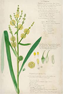 Bilderwelten Pizarra magnética - Vintage Botany Drawing Grasses IV 90x60cm