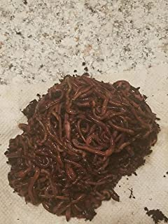 red wigglers 150 Count organically Raised. Delivered Live Fast