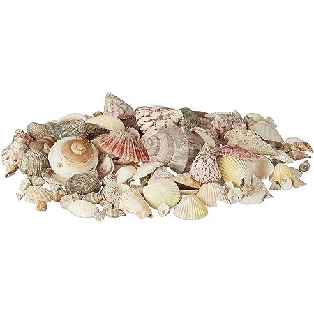 Relaxdays Mélange de coquillages coquilles de mer 1kg filet décoration maritime, coloré