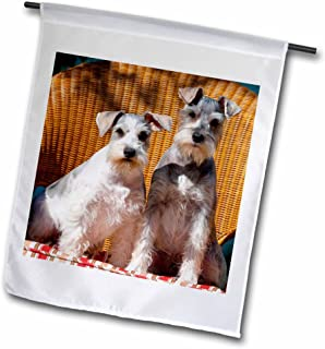 "3dRose fl_206392_1""Two Schnauzers Sitting On A Wicker Chair Garden Flag, 12 x 18"