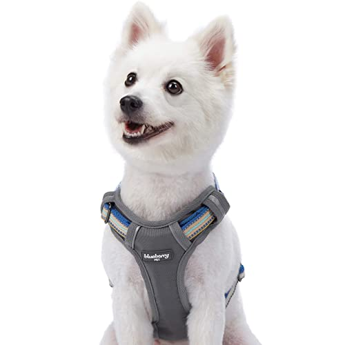 d624c94af31a Blueberry Pet Multi-Colored Stripe Collection - 3M Reflective Collars,  Harnesses, Leashes,