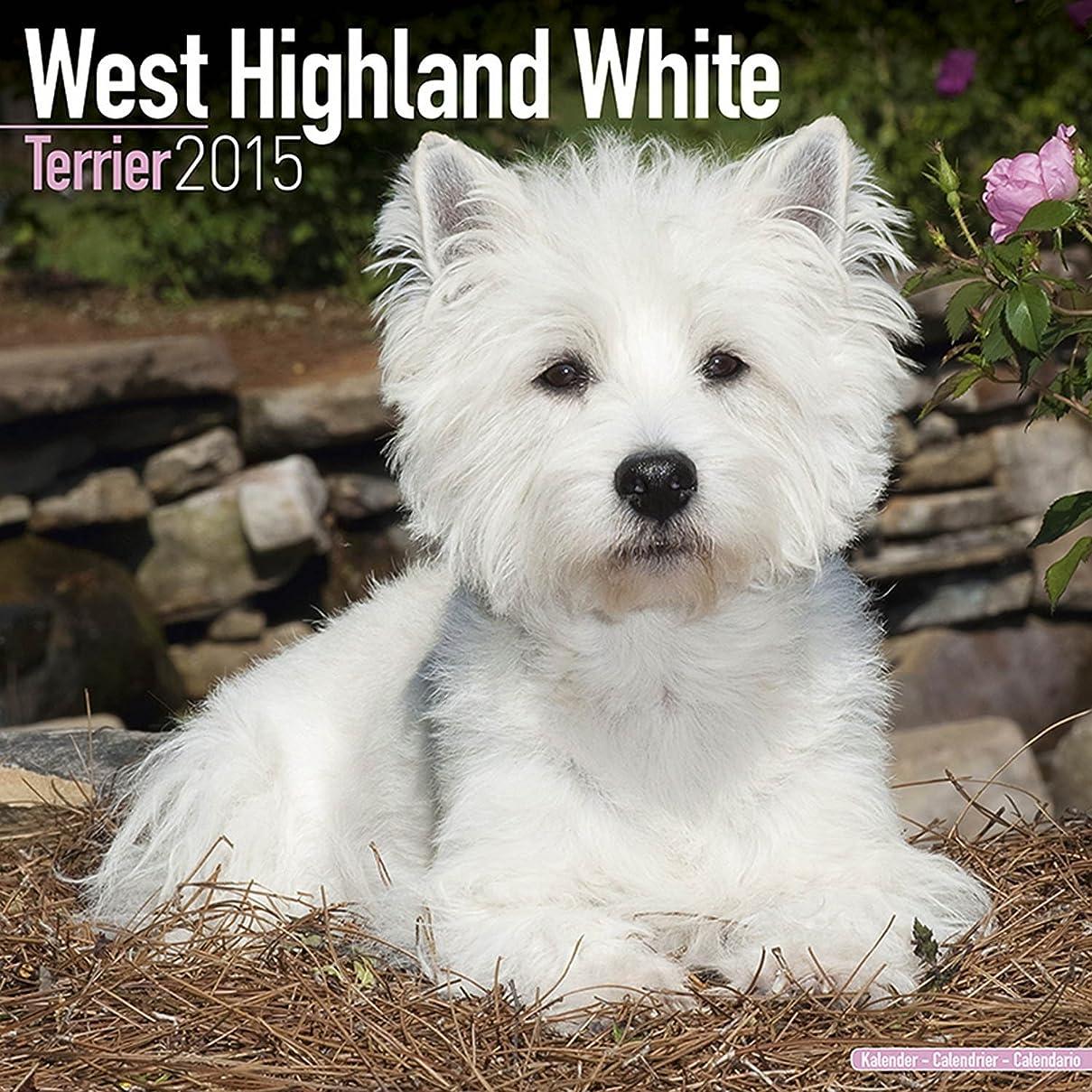 く不透明な無人West Highland Terrier 2015 (Square)
