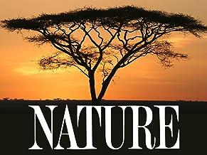 Nature Documentary Tv Shows