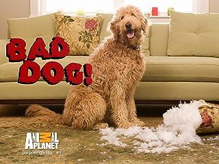 Bad Dog! Season 2