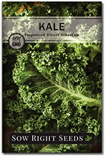 Sow Right Seeds - Dwarf Siberian Improved Kale Seed for Planting - Non-GMO Heirloom Packet with Instructions to Plant a Home Vegetable Garden, Great Gardening Gift (1)