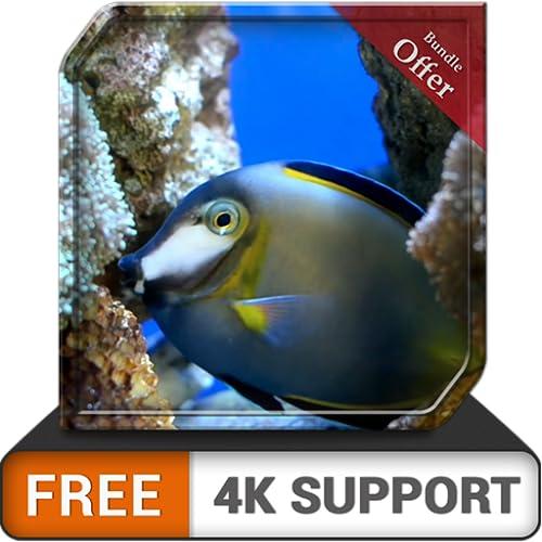 Kostenloses romantisches Aquarium HD - dekorieren Sie Ihr Zimmer mit einem wunderschönen Aquarium auf Ihrem HDR 4K-Fernseher, 8K-Fernseher und Feuergeräten als Hintergrundbild, Dekoration für die Weih