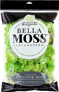 Best reindeer moss for sale Reviews