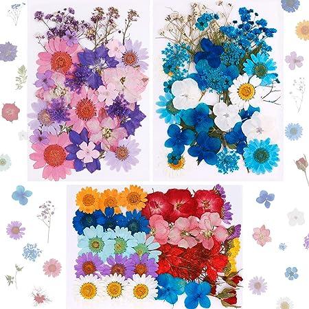 101 pièces Vraies Fleurs pressées séchées Fleurs séchées Naturelles Fleurs séchées à Ongles Multicolores pour résine, Scrapbooking, Bougie Bricolage, Fabrication Artisanale de Pendentif de Bijoux