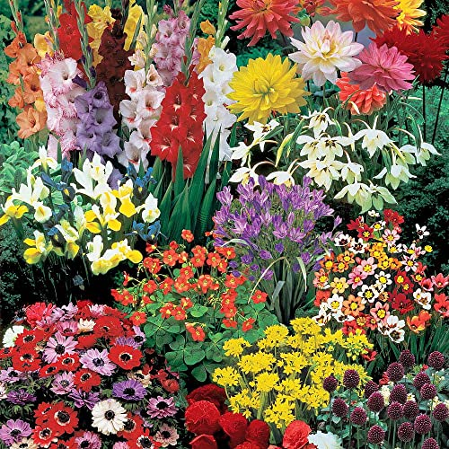 Perennial Bulbs To Plant In Summer Amazon Com