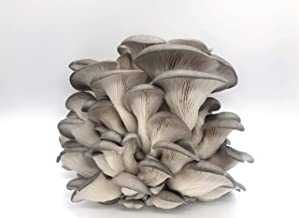 100 Grey Oyster Mushroom Spawn Plugs/Dowels to Inoculate Logs or Stumps to Grow Gourmet and Medicinal Mushrooms - Grown Your Own Mushrooms for Years to Come - Makes a Perfect Gift or a Project