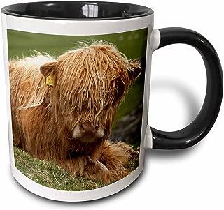 3dRose 82774_4 Highland Cow, Farm Animal, North Yorkshire, England-EU33 DWA0158-David Wall Ceramic Mug, 11oz, Black/White