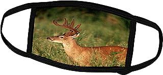 3dRose White-Tailed Deer 11-Point Buck in Velvet, Tennessee - Face Covers (fc_260057_2)