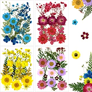 Dried Flowers Pressed Flowers for Resin Jewelry, Crafts, Scrapbook and Candle Making