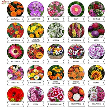 Kraft Seeds Varieties of Summer Flower Seeds (Multicolour, Pack of 25)