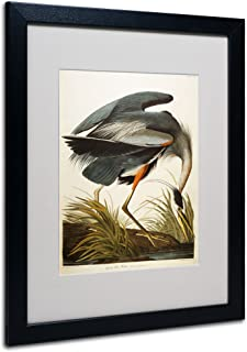 Great Blue Heron Matted Artwork by John James Audubon with Black Frame, 16 by 20-Inch