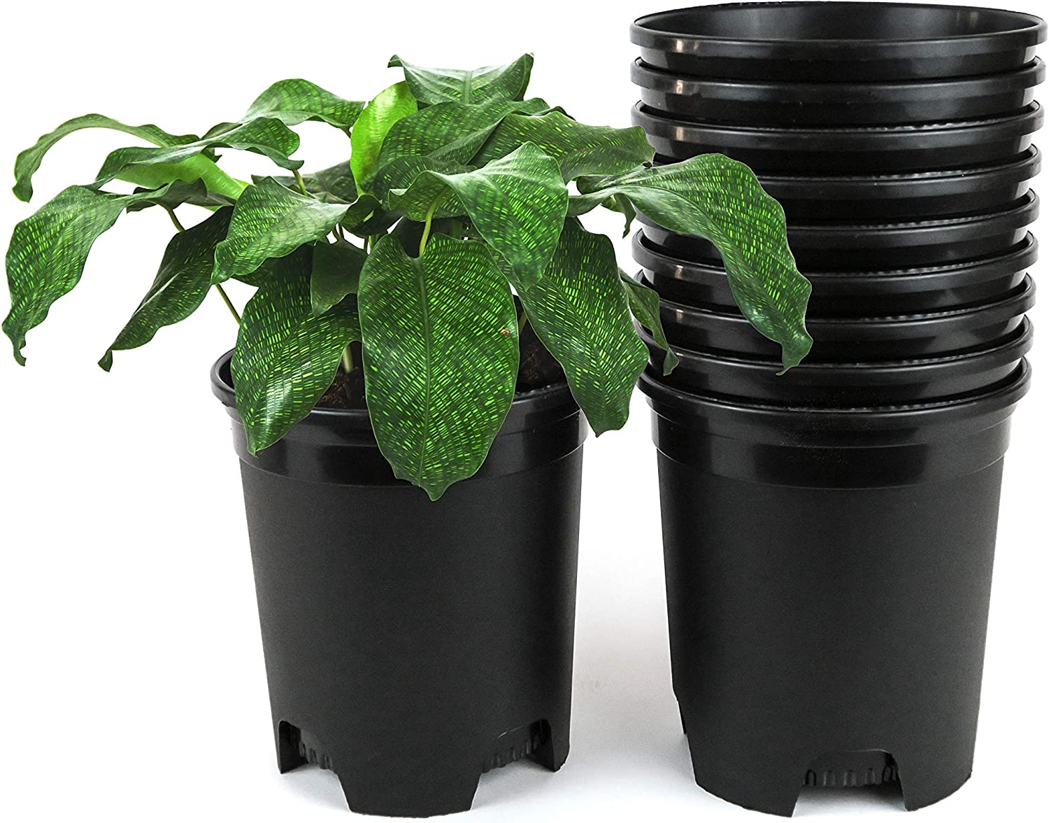 1 Gallon Nursery Pot Challenge the lowest price of Japan Ranking TOP20 Plastic Outdoor for Plants Indoor Planters