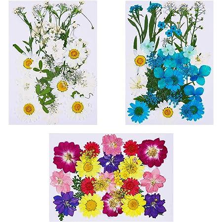 Xinzistar 101 Pièces Vraies Fleurs Séchées Pressées, Fleurs Séchées Naturelles Mixtes Feuilles Pétales pour Bricolage Bougie Résine Bijoux Pendentif Nail Art Artisanat