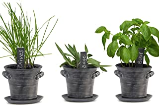 Window Garden Rustic Charm Herb Trio Kit - Grow an Indoor Kitchen Windowsill of Fresh Basil, Chives ,Sage, Plants by Seeds...