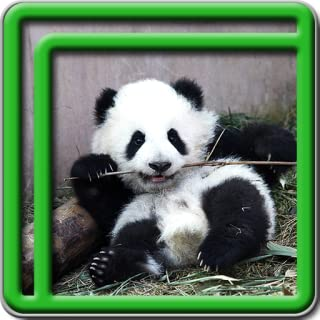 Cute Panda Live Wallpapers