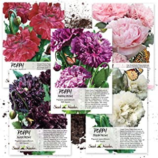 Best peony seed packets Reviews