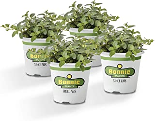 Bonnie Plants 4P5081 Peppermint Live Edible Aromatic Herb Plant - 4 Pack, Pet Friendly, Low Light, Part Shade, for Indoors