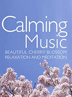 Calming Music Beautiful Cherry Blossom Relaxation and Meditation