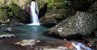 El Yunque Rainforest Experience in Puerto Rico for One - Tinggly Voucher/Gift Card in a Gift Box