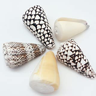PEPPERLONELY Assorted Natural Sea Shells Cone Shells, 3 Inch To 4 Inch, 1 Pound, Apprx. 4-6PC Shells