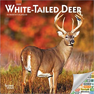 White Tailed Deer Mini Calendar 2020 Set - Deluxe 2020 White-Tailed Deer Wall Calendar with Over 100 Calendar Stickers (White Tailed Deer and Bucks Gifts, Office Supplies)