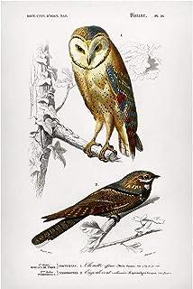 Bilderwelten Pizarra magnética - Vintage Board Owl and Swallow 90x60cm