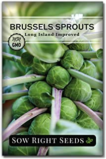 Brussels Sprouts SEEDS NON-GMO healthy USA seller Redarling Hybrid Seeds 50