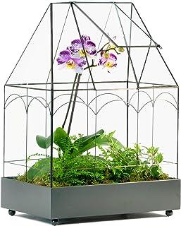 H Potter Glass Terrarium Wardian Case Succulent Planter Container for Plants Flowers Orchids Foliage and More WAR117