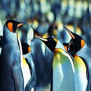 Penguins Live Wallpaper Free