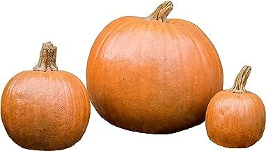 Best outdoor stone pumpkins Reviews