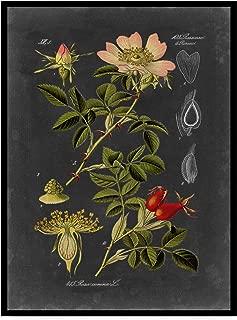Trademark Fine Art WAG00949-C2432GG Midnight Botanical I by Vision Studio, 24x32-Inch 24x32 Multicolor