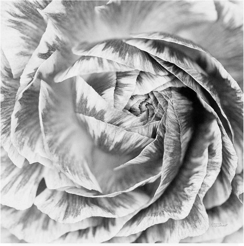 Trademark Fine Art Ranunculus Abstract IV BW Light by Laura Marshall, 14x14