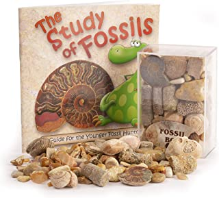 Fossil Box with Study of Fossils Booklet by Fossil Gift Shop
