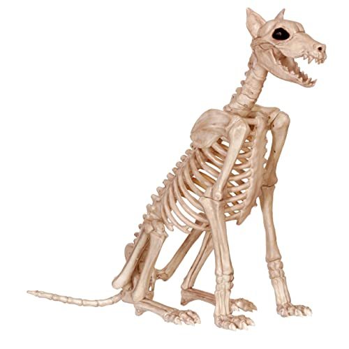 Skeleton Animals: Amazon com