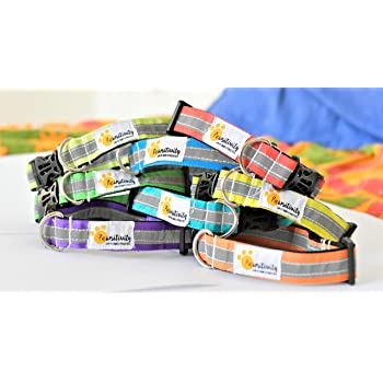 Reflective Dog Collars (Multicolour) - Set of 5