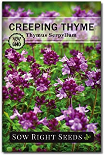 Sow Right Seeds - Creeping Thyme Seeds to Plant - Full Instructions for Planting and Growing a Beautiful Flowering Groundc...