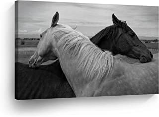 horse photography prints