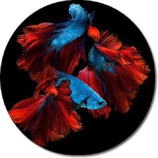 Betta Fish HD Wallpapers