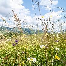 Rocky Mountain Wildflower Seed Mix - 1 Lb Seed Pouch - 22 Wild Flower Seed Varieties - Annuals, Perennials and Bi-Annuals - Flower Garden